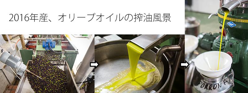 オリーブオイルの搾油風景
